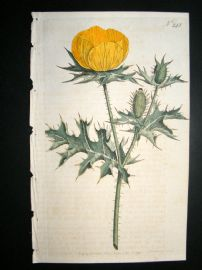 Curtis 1793 Hand Col Botanical Print. Prickly Poppy 243